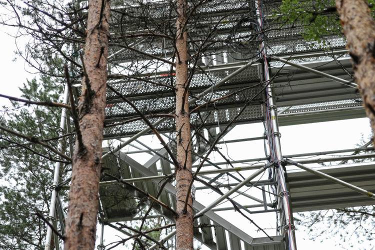 """""""Sylvi""""(keskellä) on maailman tarkimmin seurattu puu. Puuta seurataan noin 15 eri mittauksen avulla. Kuva: Matti Porre/Tasavallan presidentin kanslia"""